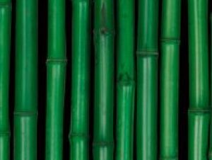 Moso-bamboe-groen