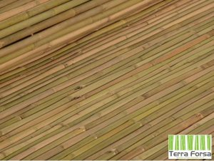 Tonkin-bamboo-natural-yellow