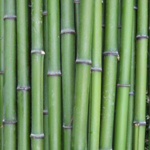 verse_groene-bamboepalen